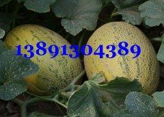 哈密瓜-陕西万亩大棚哈密瓜产地上市价格
