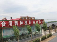厂家批发散装猴头菇粉 猴头菇粉代加工 猴菇饼干食品配料