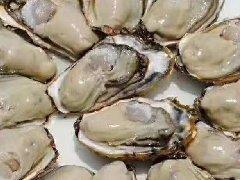 -正宗海阳乳山鲜活牡蛎生蚝,最新产地行情批发