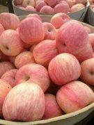 -山东苹果价格红富士苹果价格