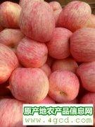 -山东红富士苹果产地批发红富士苹果产地批发价