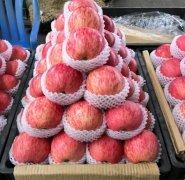 -东莞下桥水果批发市场,欢迎来货代销