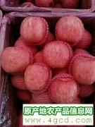 -红富士苹果种植产地批发
