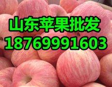 -嘎啦苹果批发价格山东苹果大量供应