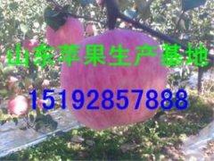 -今年的山东红富士苹果批发产地价格是多少