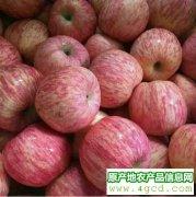 -冷库红富士苹果大降价5毛每斤