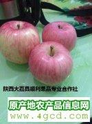 -陕西冷库红富士苹果价格