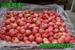 -18254981288山东苹果产地最新价格,红富士