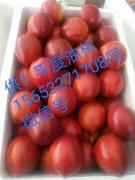 -供!山东平度(大棚,露天)油桃,市场收货专