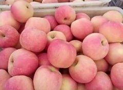 -红富士苹果产地直销大量上市供应
