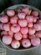 -山东优质红富士苹果大量销售中