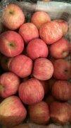 -红富士苹果常年供应,货源充足,口感脆甜,诚