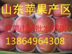 -山东红富士苹果批发价格 13864964308