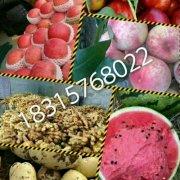 -供应哪里批发苹果便宜,山东红富士苹果产地价