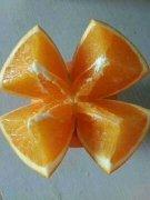 -宜昌蜜橘,伦晚脐橙,纽荷尔,长虹