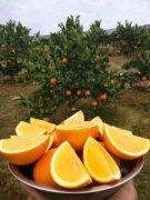 -安江是水稻之父袁隆平的故乡,盛产柑橘,长年