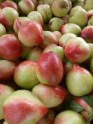 -山东产地直销万亩大棚油桃大量上市