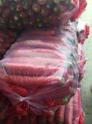 -陕西大荔万亩优质红萝卜产地批发大量上市