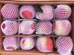 -陕西冷库纸袋红富士苹果价格膜袋苹果产地纸加膜苹果批发