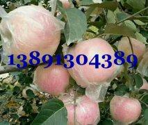 陕西洛川纸袋红富士苹果价格,冷库红富士苹果产地批发价格