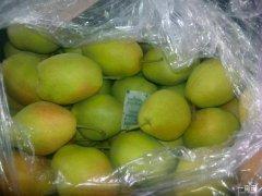 陕西大荔万吨冷库红香酥梨产地批发价格