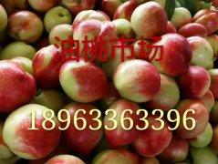 -山东大棚油桃冷库红富士苹果价格行情分析