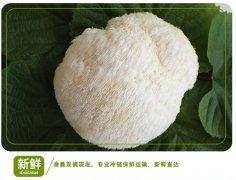 -东北猴头菇种植基地 猴头菇批发 质优价廉 新鲜猴头菇上市