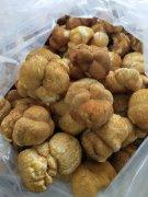 - 中国猴头菇之乡产地直销精品猴头菇