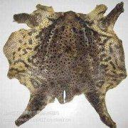 -优质蟾蜍皮 癞蛤蟆皮 蟾皮 蛤蟆皮一整张要卖多少价格用量多少怎么吃