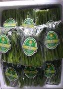 大量供应蔬菜品牌包装袋opp袋复合袋