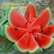 山东聊城许营优质西瓜代办13506359839