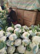 -供应大量菜花 有机花 代收代发菜花