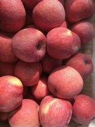 -陕西红富士苹果基地价格红香酥梨产地行情