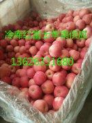 -136263331680山东冷库红富士苹果批发价格红富士苹