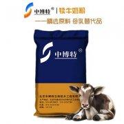 -犊牛的品种犊牛奶粉代乳粉