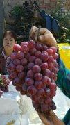 -红提葡萄产地价格,陕西红提葡萄批发价格